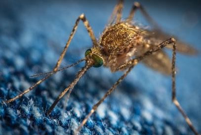 10 curiosità sulle zanzare che forse non sai